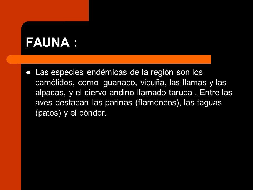 FAUNA : Las especies endémicas de la región son los camélidos, como guanaco, vicuña, las llamas y las alpacas, y el ciervo andino llamado taruca. Entr