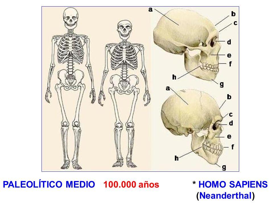 PALEOLÍTICO MEDIO 100.000 años * HOMO SAPIENS (Neanderthal)