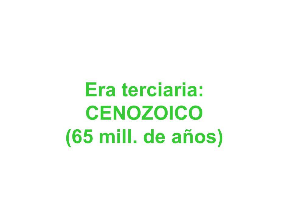 Era terciaria: CENOZOICO (65 mill. de años)