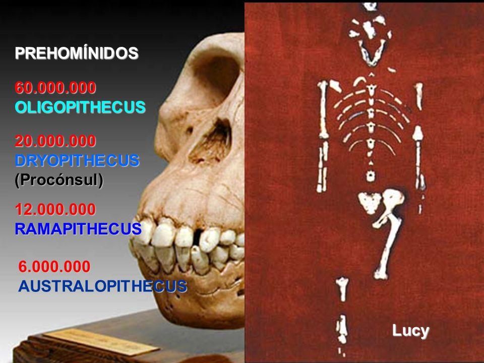PUEBLOS INVASORES CARTAGINESES (560-206 a.C..): Invaden la Península Ibérica desde el 237 a.C.