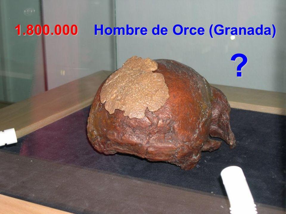780.000 Homo Antecessor Atapuerca (Burgos) En la Gran Dolina se encontraron la mandíbula y dentadura de un joven de 14 años (800.000 años).
