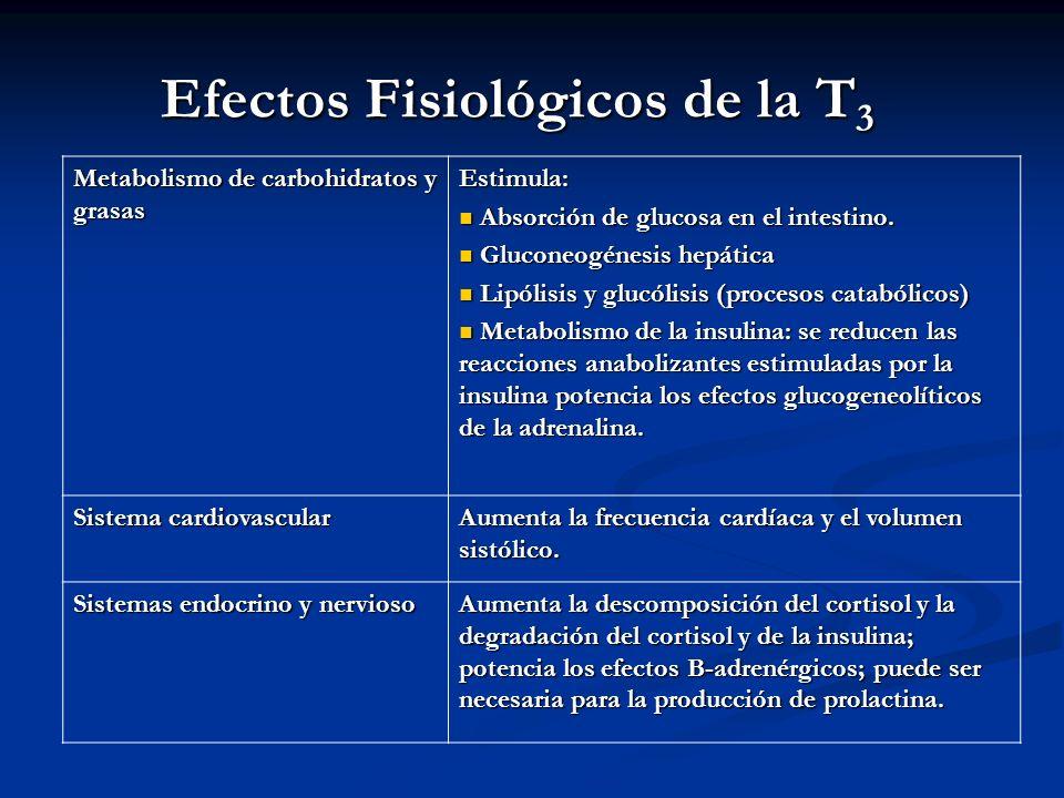 A. BURGOS M Efectos Fisiológicos de la T 3 Metabolismo de carbohidratos y grasas Estimula: Absorción de glucosa en el intestino. Absorción de glucosa