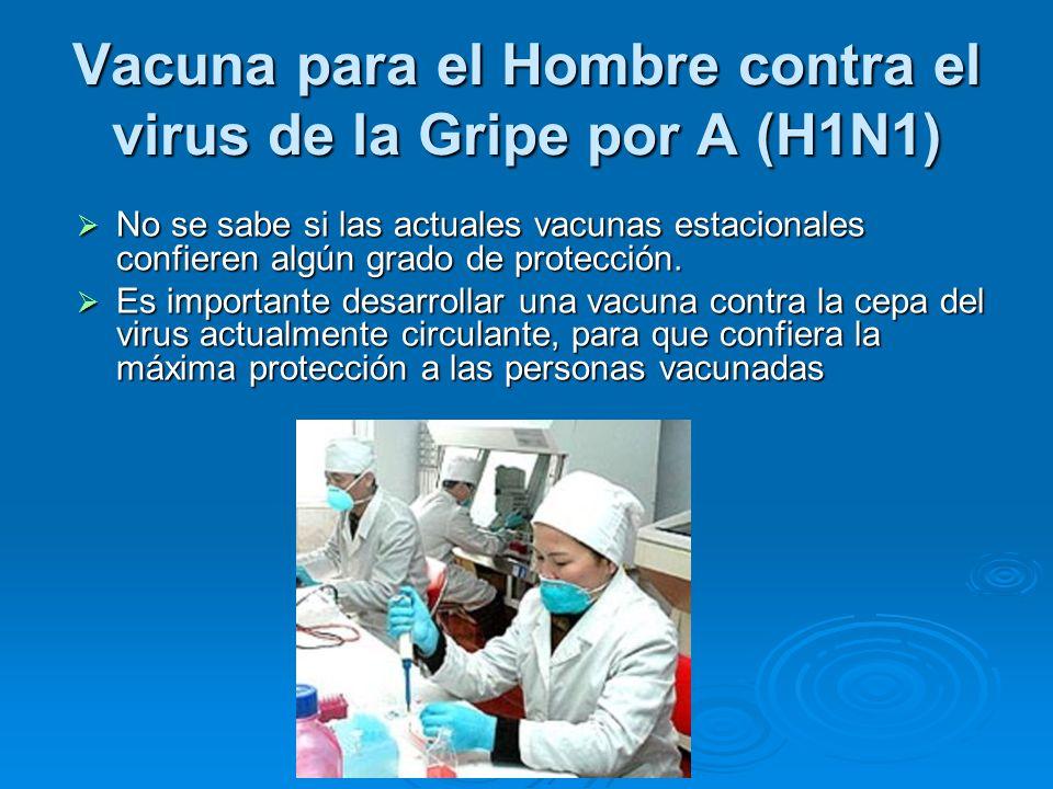 Vacuna para el Hombre contra el virus de la Gripe por A (H1N1) No se sabe si las actuales vacunas estacionales confieren algún grado de protección. No