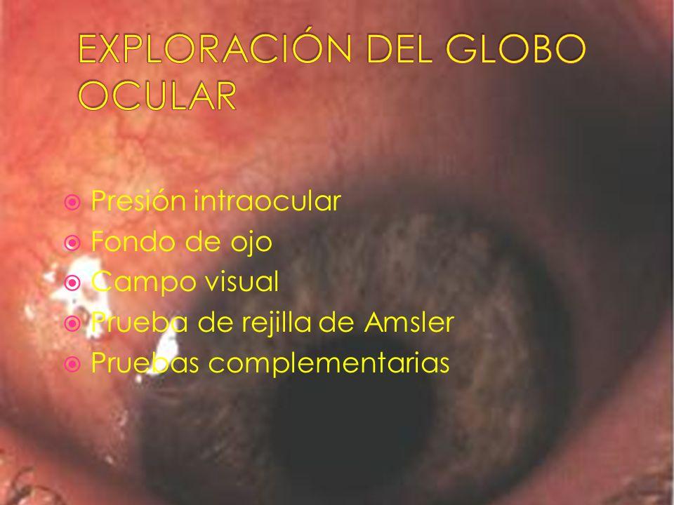 Presión intraocular Fondo de ojo Campo visual Prueba de rejilla de Amsler Pruebas complementarias