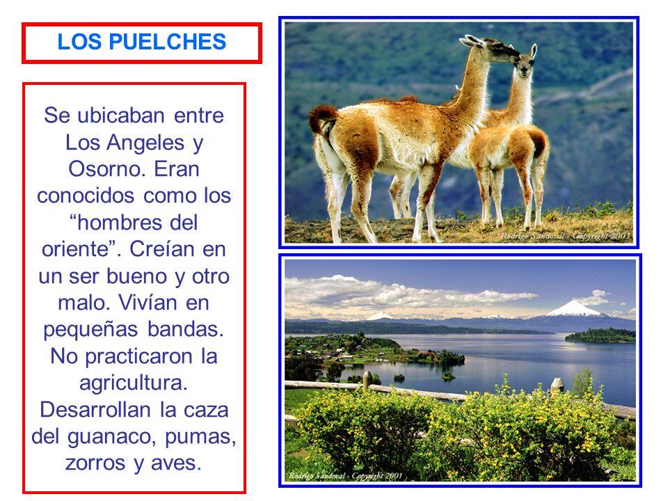 Se ubicaban desde Chillán a Los Angeles. Se conocen como hombres del Pehuén. Base de su alimentación es el Pehuén o Piñón. Desconocían las técnicas ag