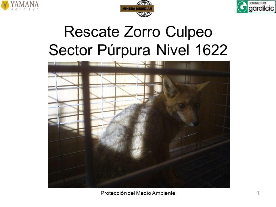 Protección del Medio Ambiente1 Rescate Zorro Culpeo Sector Púrpura Nivel 1622