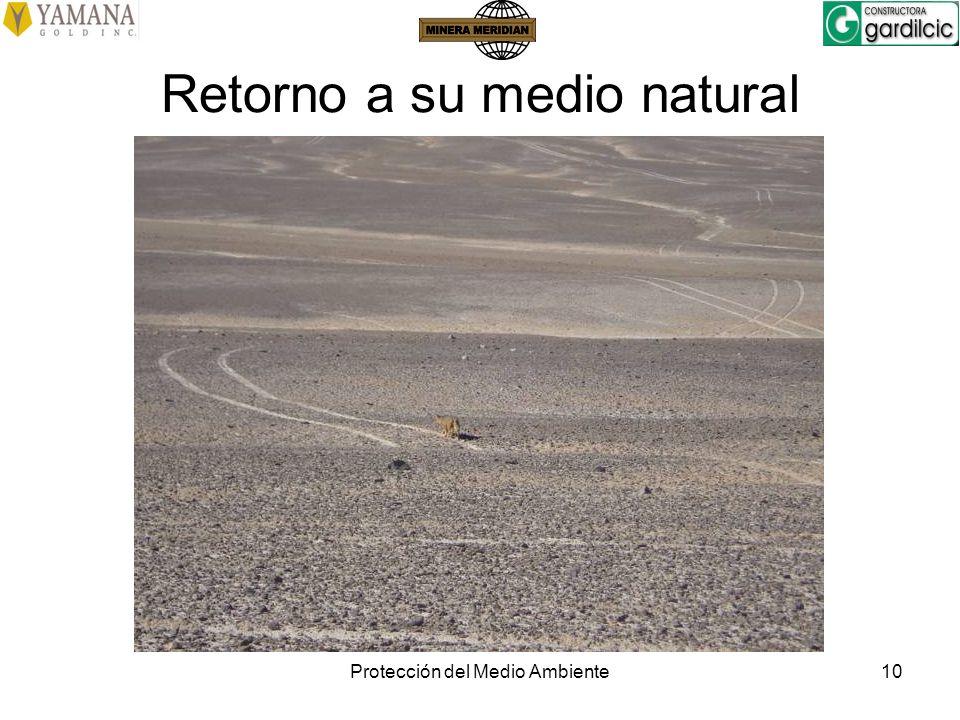 Protección del Medio Ambiente10 Retorno a su medio natural