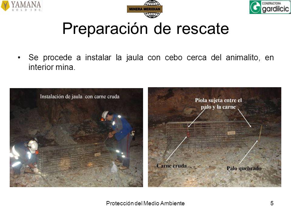 Protección del Medio Ambiente5 Preparación de rescate Se procede a instalar la jaula con cebo cerca del animalito, en interior mina.