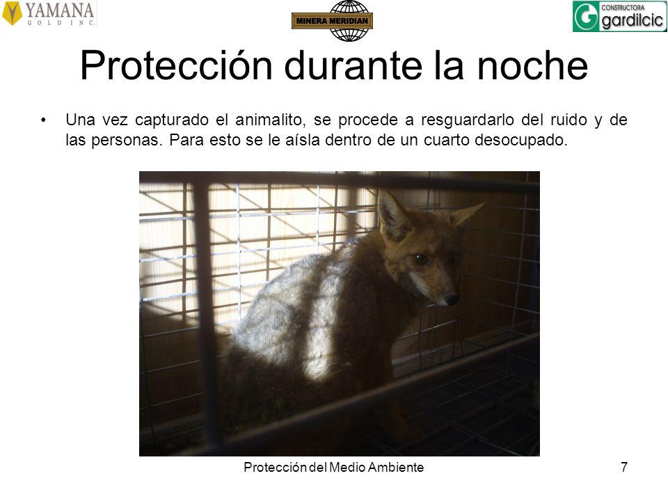 Protección del Medio Ambiente7 Protección durante la noche Una vez capturado el animalito, se procede a resguardarlo del ruido y de las personas. Para