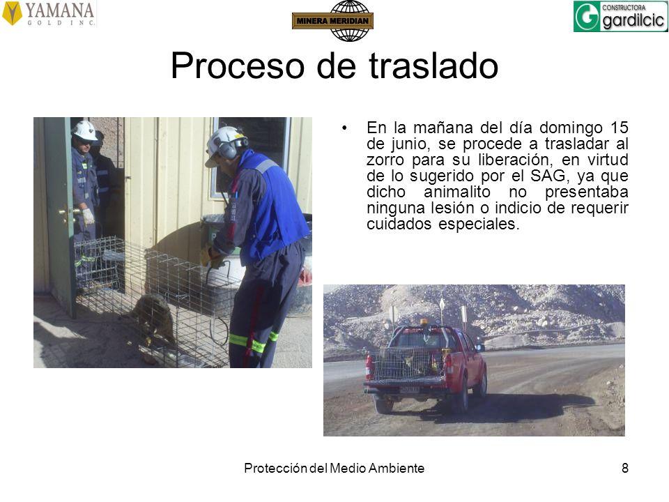 Protección del Medio Ambiente8 Proceso de traslado En la mañana del día domingo 15 de junio, se procede a trasladar al zorro para su liberación, en vi