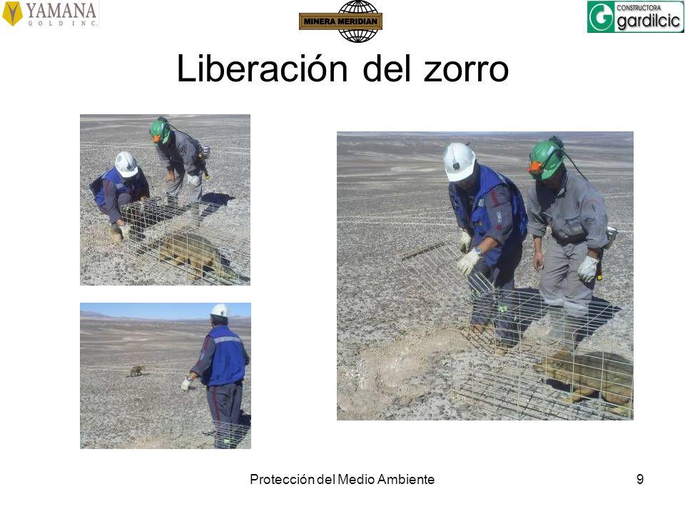Protección del Medio Ambiente9 Liberación del zorro