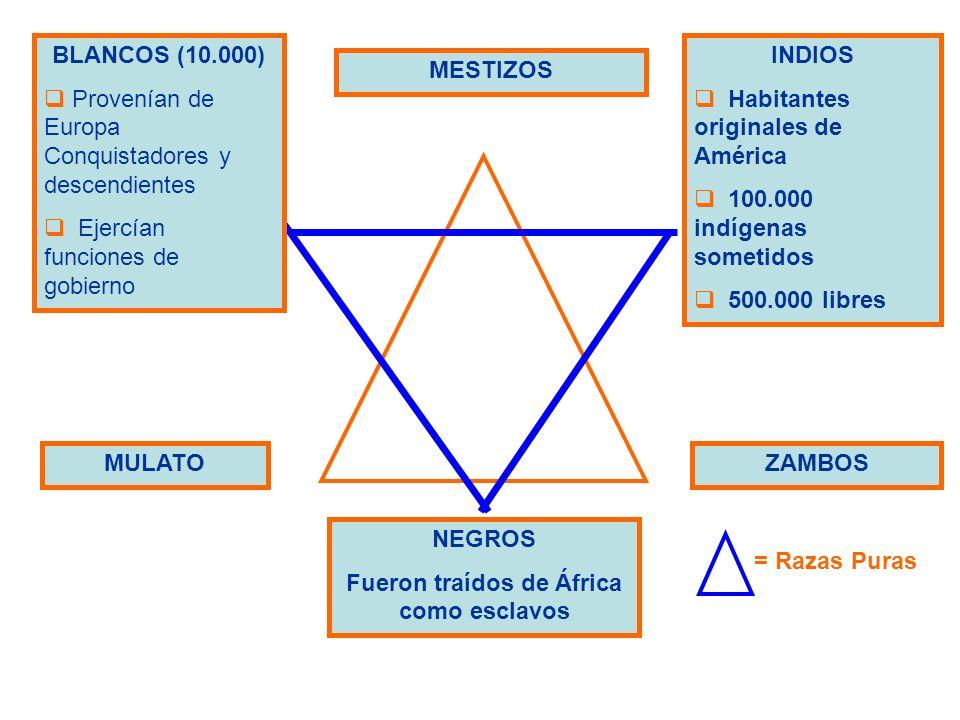 BLANCOS (10.000) Provenían de Europa Conquistadores y descendientes Ejercían funciones de gobierno INDIOS Habitantes originales de América 100.000 ind