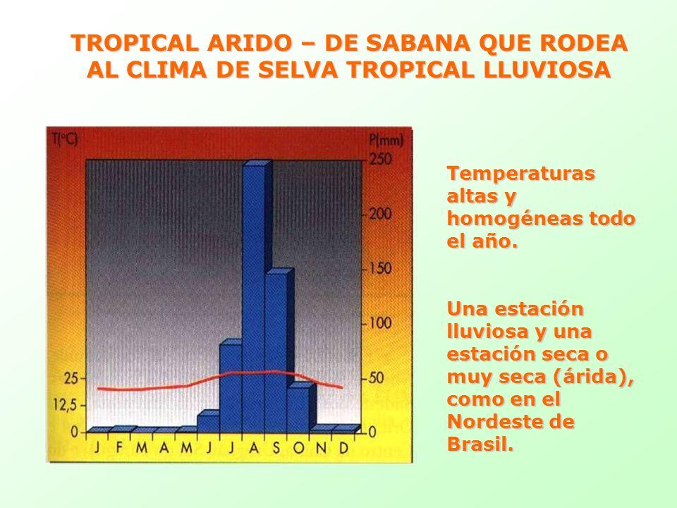 TROPICAL ARIDO – DE SABANA QUE RODEA AL CLIMA DE SELVA TROPICAL LLUVIOSA Temperaturas altas y homogéneas todo el año. Una estación lluviosa y una esta