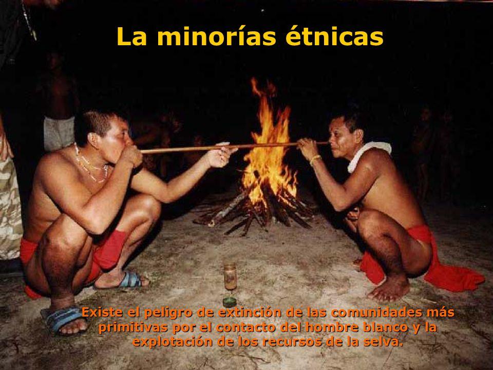 Existe el peligro de extinción de las comunidades más primitivas por el contacto del hombre blanco y la explotación de los recursos de la selva. La mi