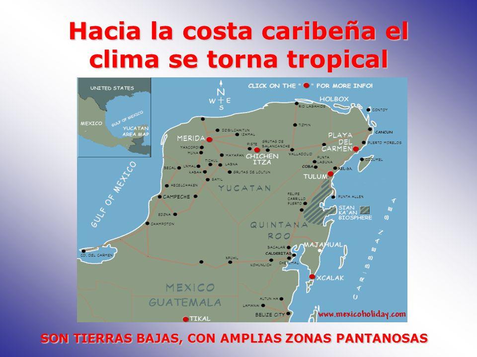 Hacia la costa caribeña el clima se torna tropical SON TIERRAS BAJAS, CON AMPLIAS ZONAS PANTANOSAS