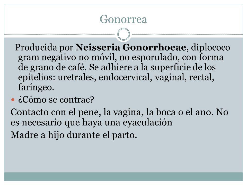 Gonorrea Producida por Neisseria Gonorrhoeae, diplococo gram negativo no móvil, no esporulado, con forma de grano de café. Se adhiere a la superficie