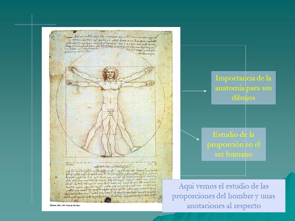Importancia de la anatomía para sus dibujos Aquí vemos el estudio de las proporciones del hombre y unas anotaciones al respecto Estudio de la proporci