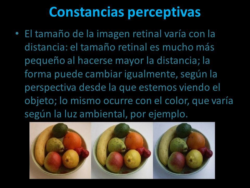 Constancias perceptivas El tamaño de la imagen retinal varía con la distancia: el tamaño retinal es mucho más pequeño al hacerse mayor la distancia; l