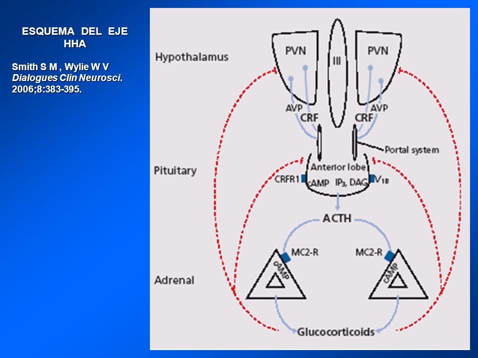 ESQUEMA DEL EJE HHA Smith S M, Wylie W V Dialogues Clin Neurosci. 2006;8:383-395.