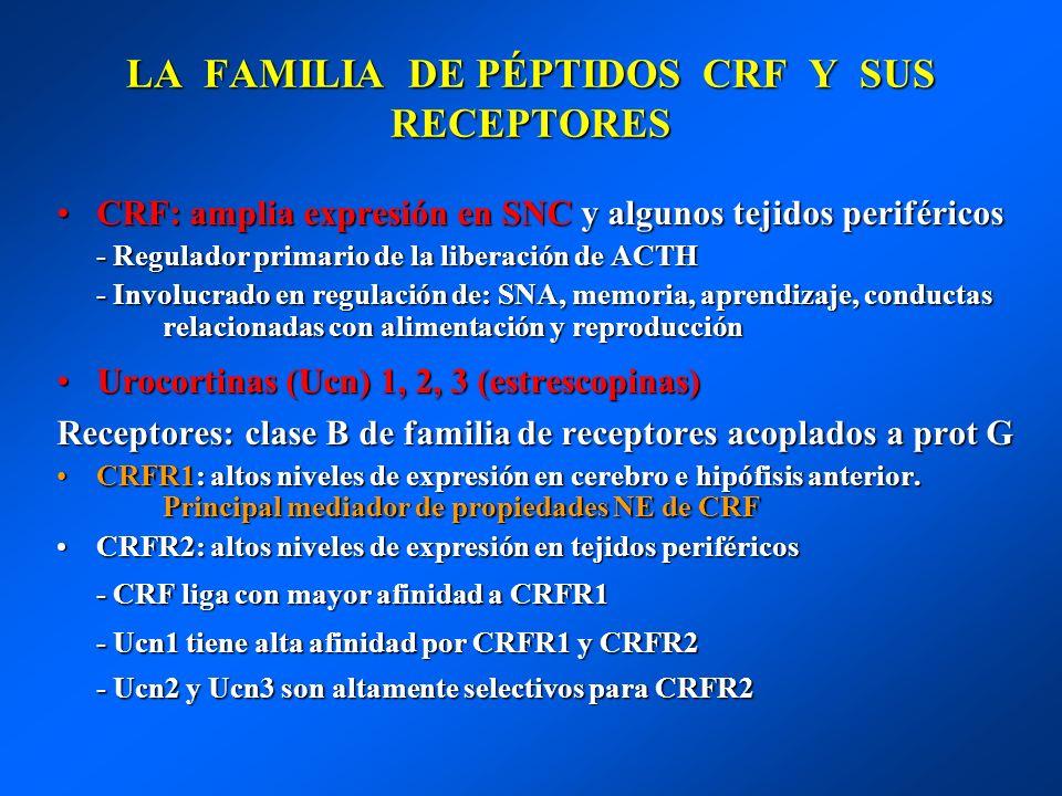 LA FAMILIA DE PÉPTIDOS CRF Y SUS RECEPTORES CRF: amplia expresión en SNC y algunos tejidos periféricosCRF: amplia expresión en SNC y algunos tejidos p