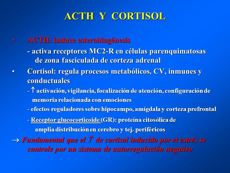 ACTH Y CORTISOL ACTH: induce esteroidogénesisACTH: induce esteroidogénesis - activa receptores MC2-R en células parenquimatosas de zona fasciculada de