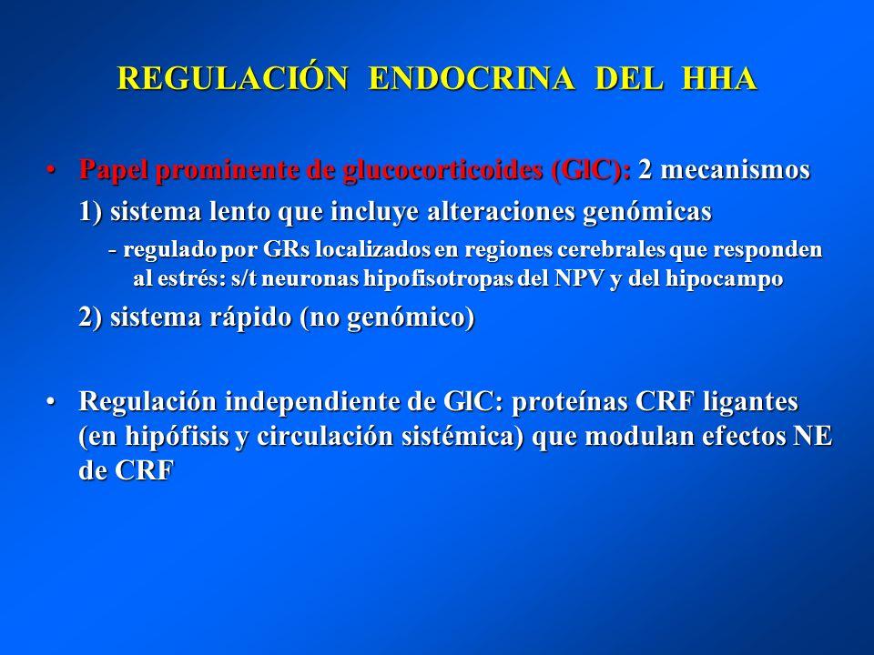 REGULACIÓN ENDOCRINA DEL HHA Papel prominente de glucocorticoides (GlC): 2 mecanismosPapel prominente de glucocorticoides (GlC): 2 mecanismos 1) siste