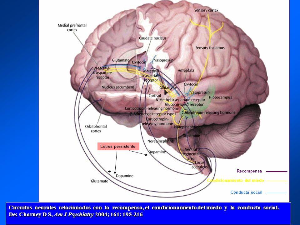 Circuitos neurales relacionados con la recompensa, el condicionamiento del miedo y la conducta social. De: Charney D S, Am J Psychiatry 2004; 161: 195