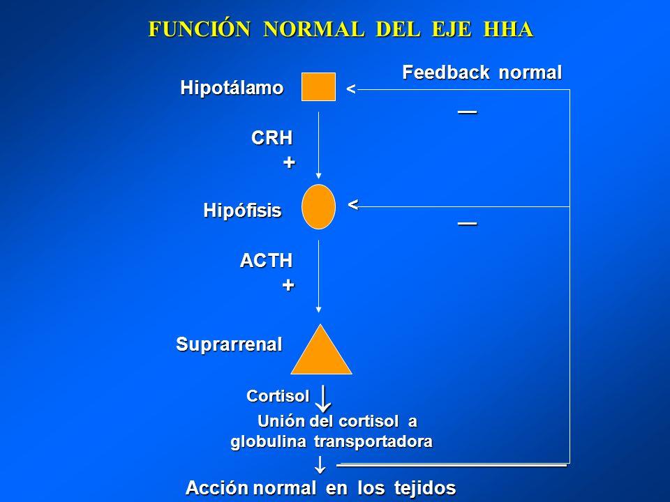 FUNCIÓN NORMAL DEL EJE HHA Hipotálamo Hipotálamo CRH + Hipófisis Hipófisis ACTH ACTH + Suprarrenal Suprarrenal Unión del cortisol a Unión del cortisol