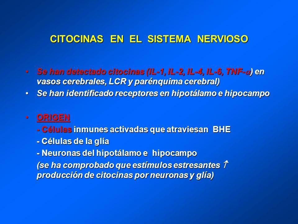 CITOCINAS EN EL SISTEMA NERVIOSO Se han detectado citocinas (IL-1, IL-2, IL-4, IL-6, TNF- ) en vasos cerebrales, LCR y parénquima cerebral)Se han dete
