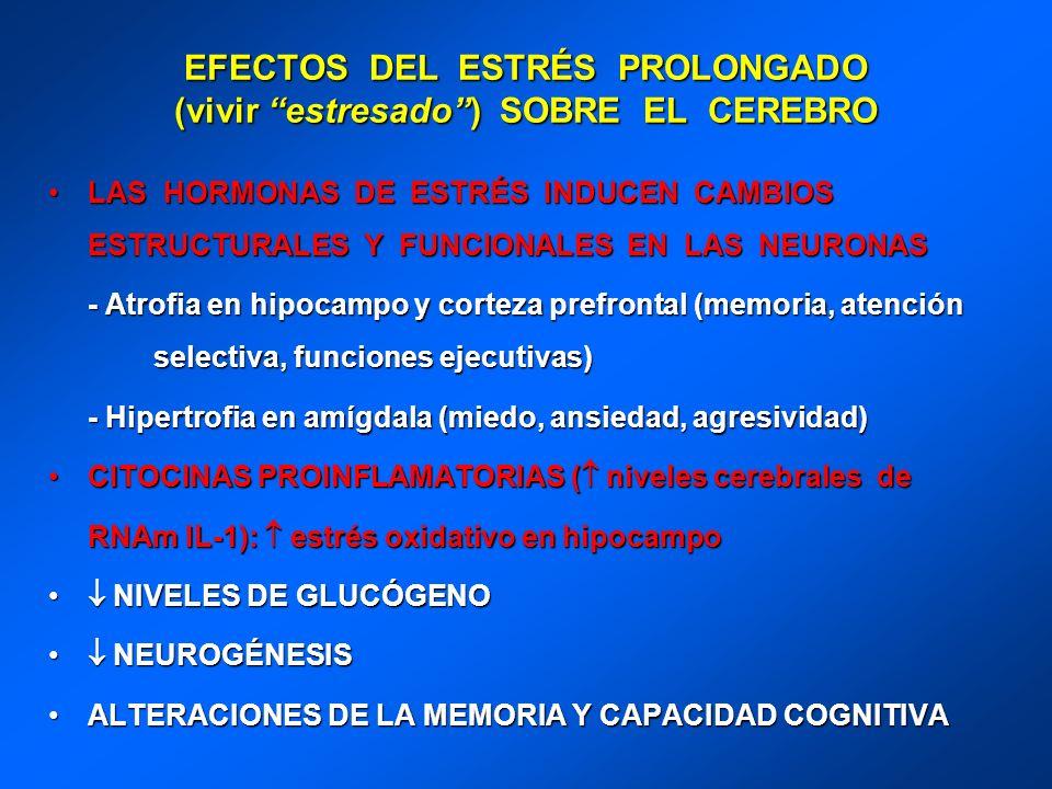 EFECTOS DEL ESTRÉS PROLONGADO (vivir estresado) SOBRE EL CEREBRO LAS HORMONAS DE ESTRÉS INDUCEN CAMBIOS ESTRUCTURALES Y FUNCIONALES EN LAS NEURONASLAS