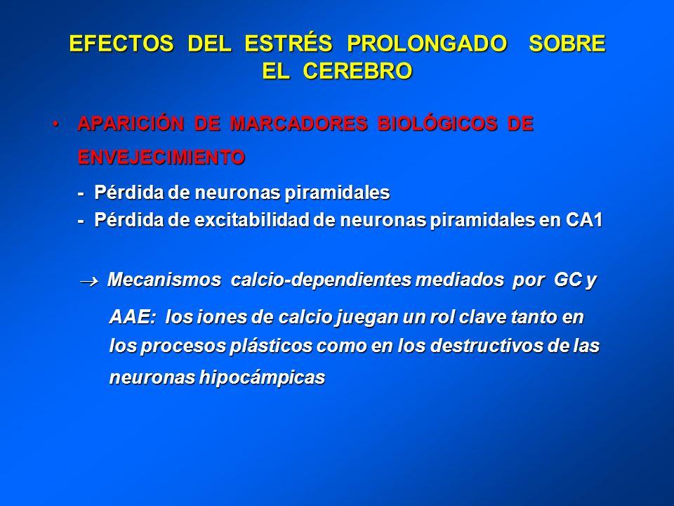 EFECTOS DEL ESTRÉS PROLONGADO SOBRE EL CEREBRO APARICIÓN DE MARCADORES BIOLÓGICOS DE ENVEJECIMIENTOAPARICIÓN DE MARCADORES BIOLÓGICOS DE ENVEJECIMIENT