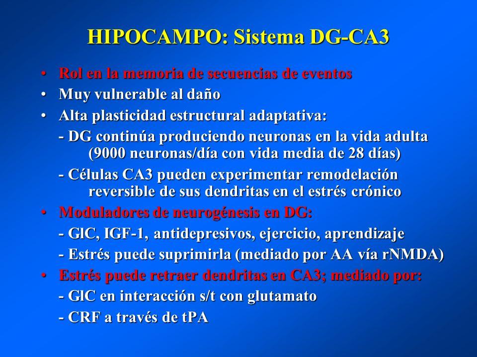 HIPOCAMPO: Sistema DG-CA3 Rol en la memoria de secuencias de eventosRol en la memoria de secuencias de eventos Muy vulnerable al dañoMuy vulnerable al