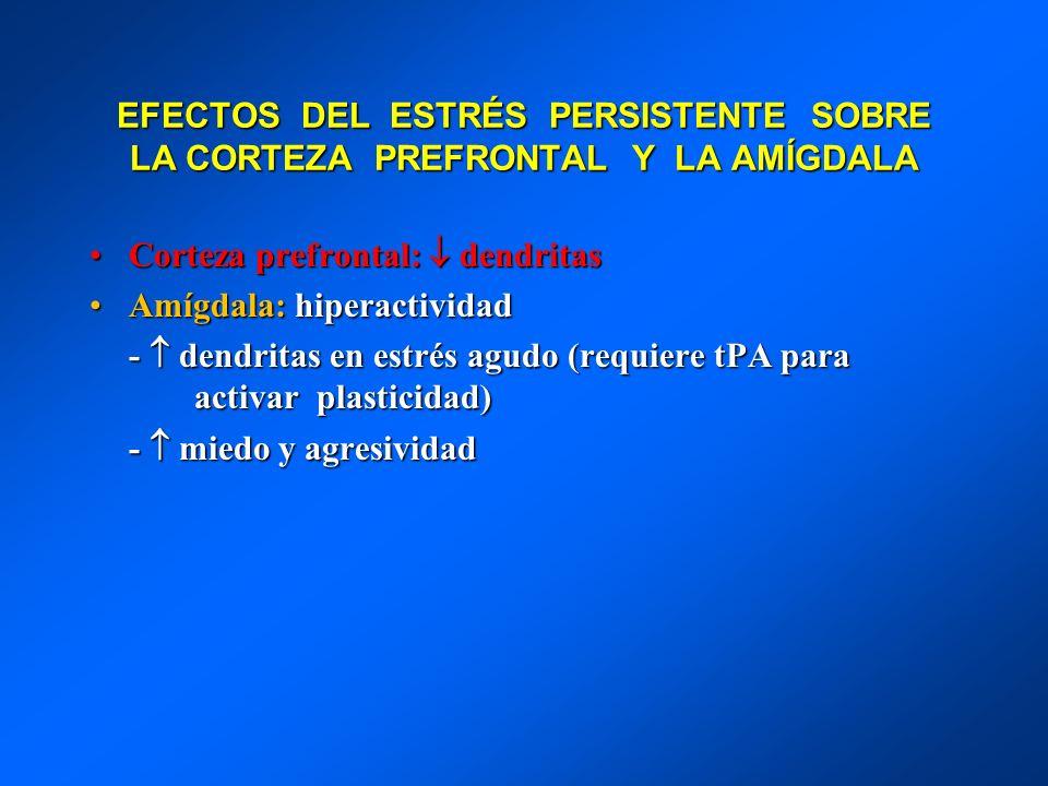 EFECTOS DEL ESTRÉS PERSISTENTE SOBRE LA CORTEZA PREFRONTAL Y LA AMÍGDALA Corteza prefrontal: dendritasCorteza prefrontal: dendritas Amígdala: hiperact