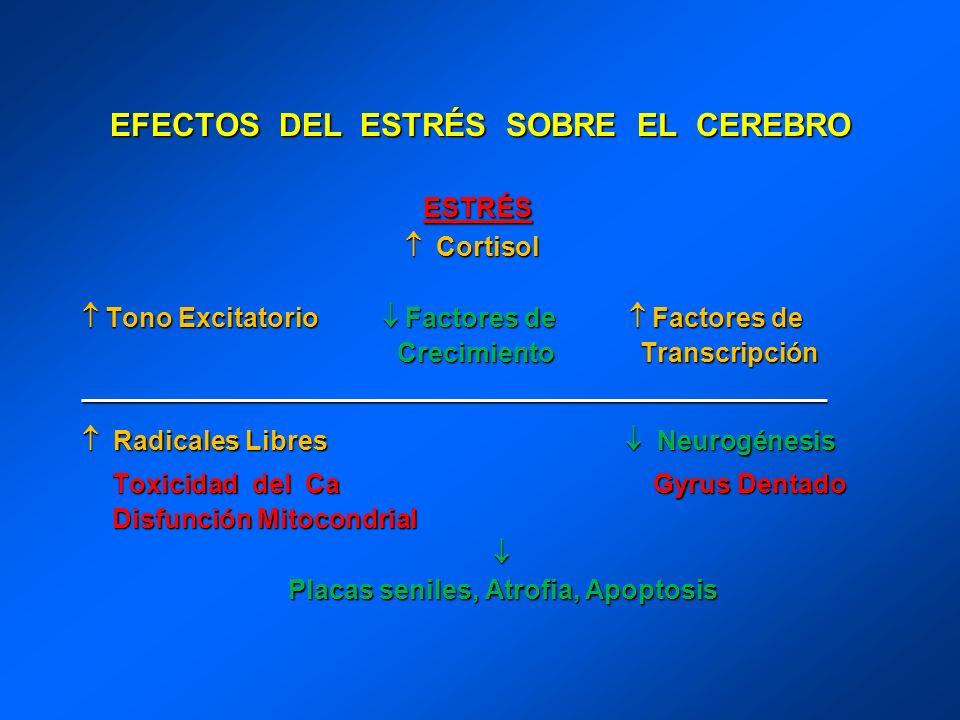 EFECTOS DEL ESTRÉS SOBRE EL CEREBRO ESTRÉS Cortisol Cortisol Tono Excitatorio Factores de Factores de Tono Excitatorio Factores de Factores de Crecimi