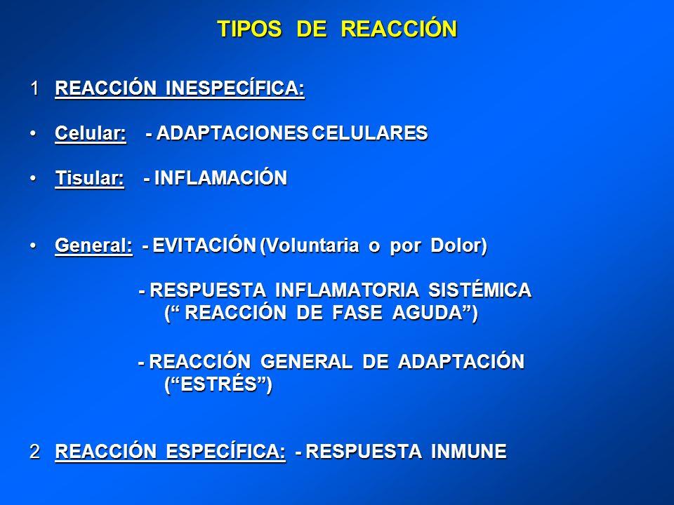 TIPOS DE REACCIÓN 1REACCIÓN INESPECÍFICA: Celular: - ADAPTACIONES CELULARESCelular: - ADAPTACIONES CELULARES Tisular: - INFLAMACIÓNTisular: - INFLAMAC