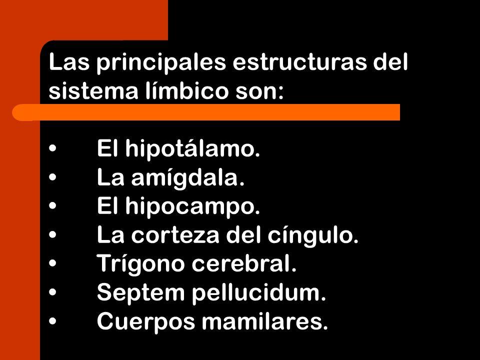 Las principales estructuras del sistema límbico son: El hipotálamo. La amígdala. El hipocampo. La corteza del cíngulo. Trígono cerebral. Septem pelluc