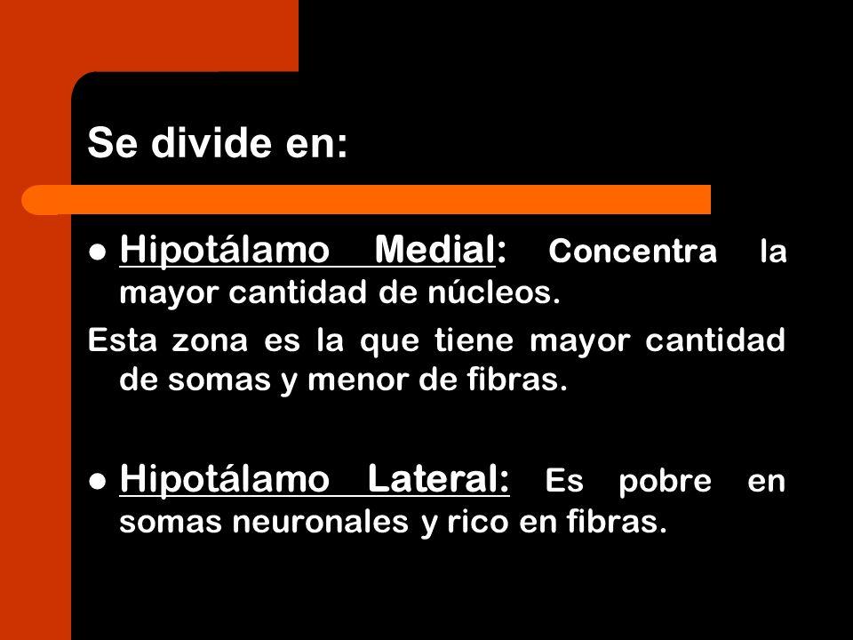Se divide en: Hipotálamo Medial: Concentra la mayor cantidad de núcleos. Esta zona es la que tiene mayor cantidad de somas y menor de fibras. Hipotála