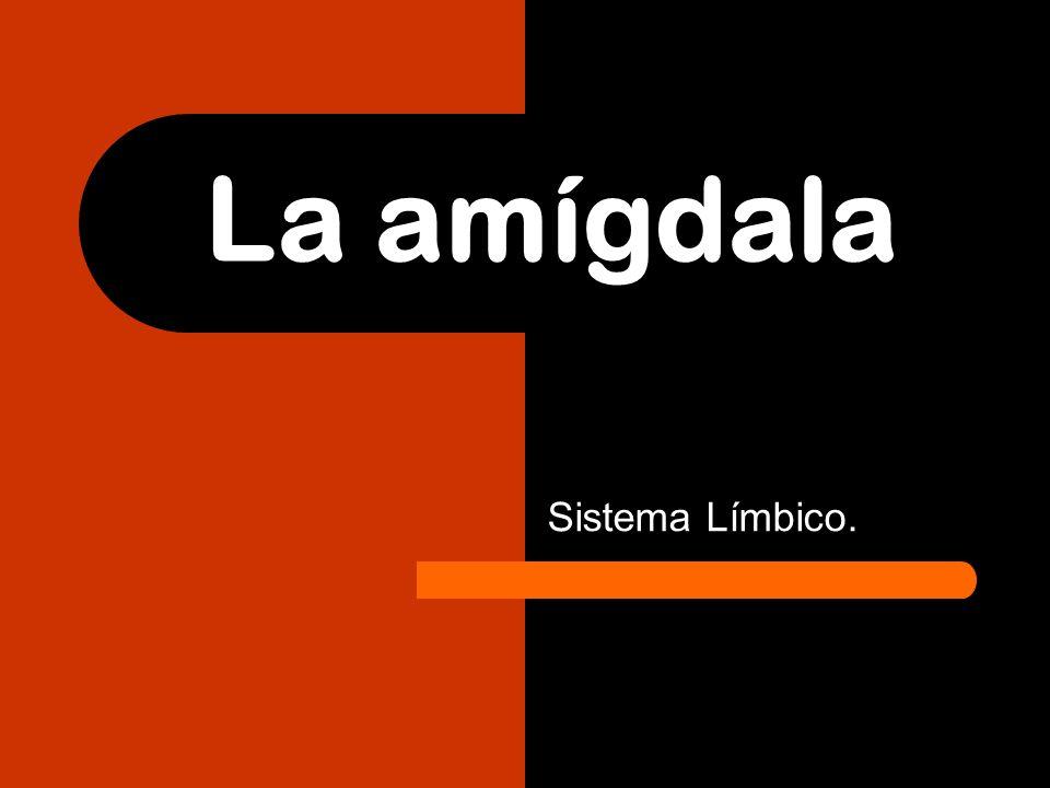 La amígdala Sistema Límbico.