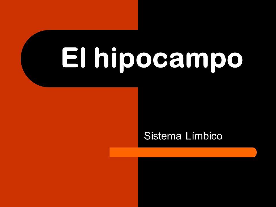 El hipocampo Sistema Límbico