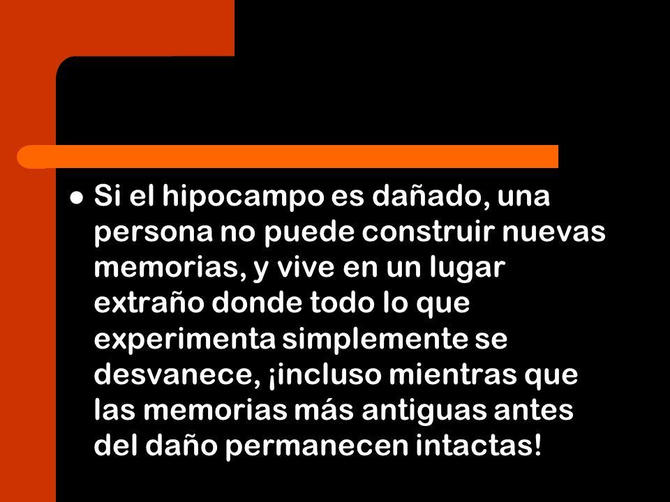 Si el hipocampo es dañado, una persona no puede construir nuevas memorias, y vive en un lugar extraño donde todo lo que experimenta simplemente se des