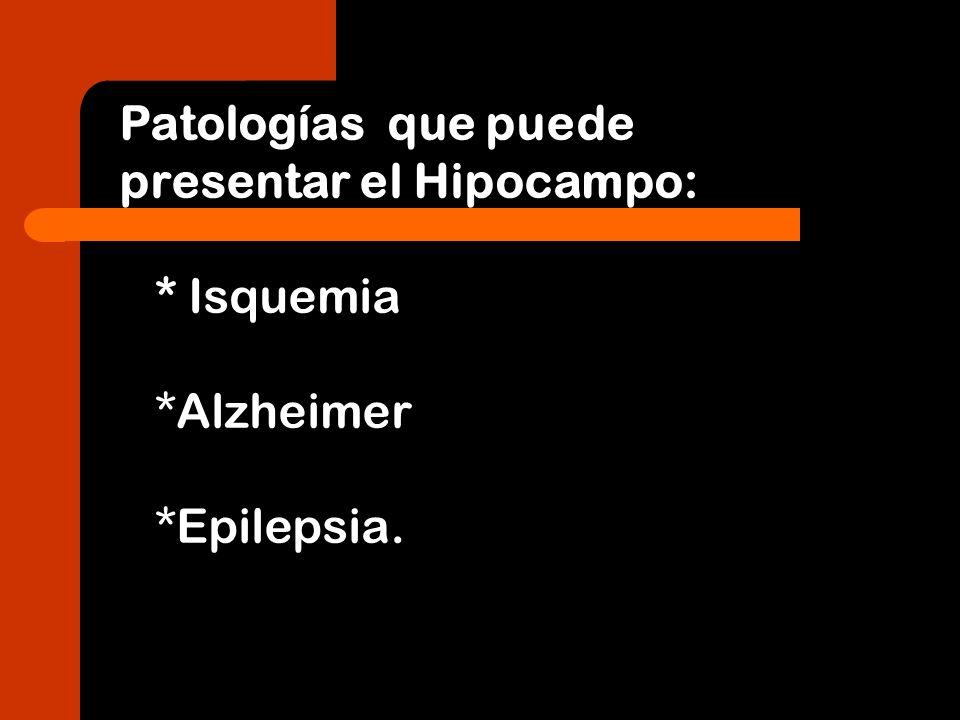 Patologías que puede presentar el Hipocampo: * Isquemia *Alzheimer *Epilepsia.
