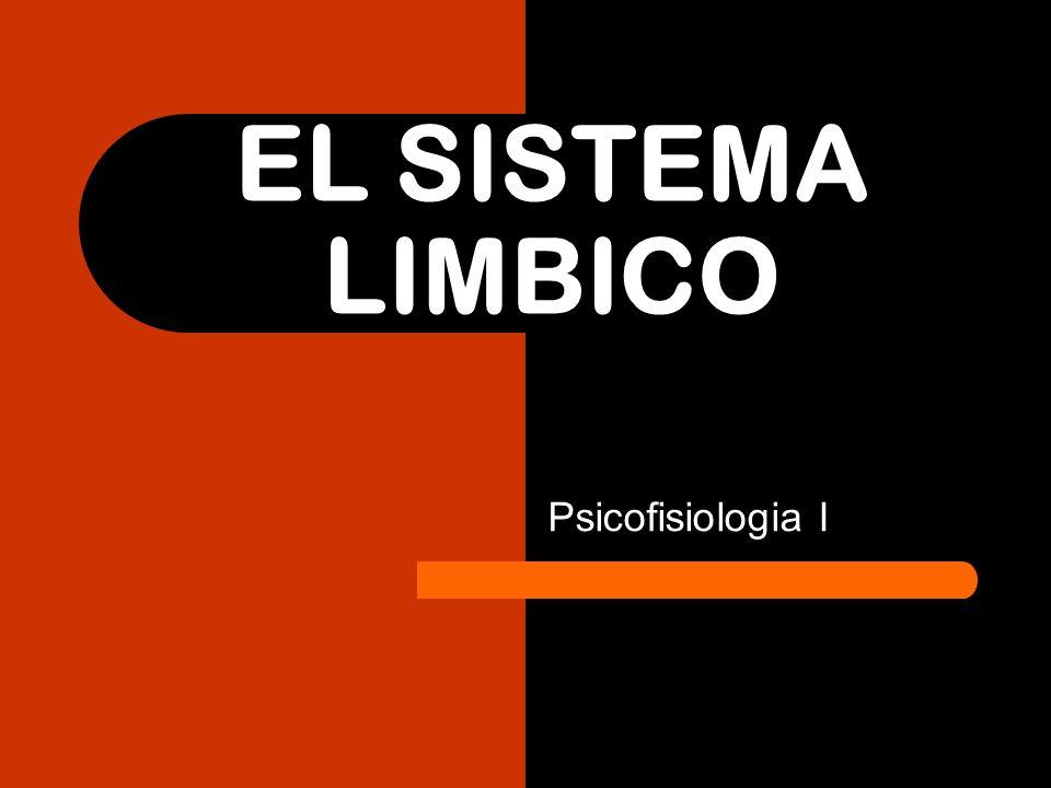 EL SISTEMA LIMBICO Psicofisiologia I
