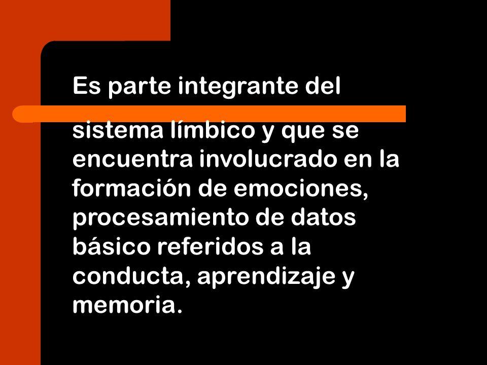 Es parte integrante del sistema límbico y que se encuentra involucrado en la formación de emociones, procesamiento de datos básico referidos a la cond