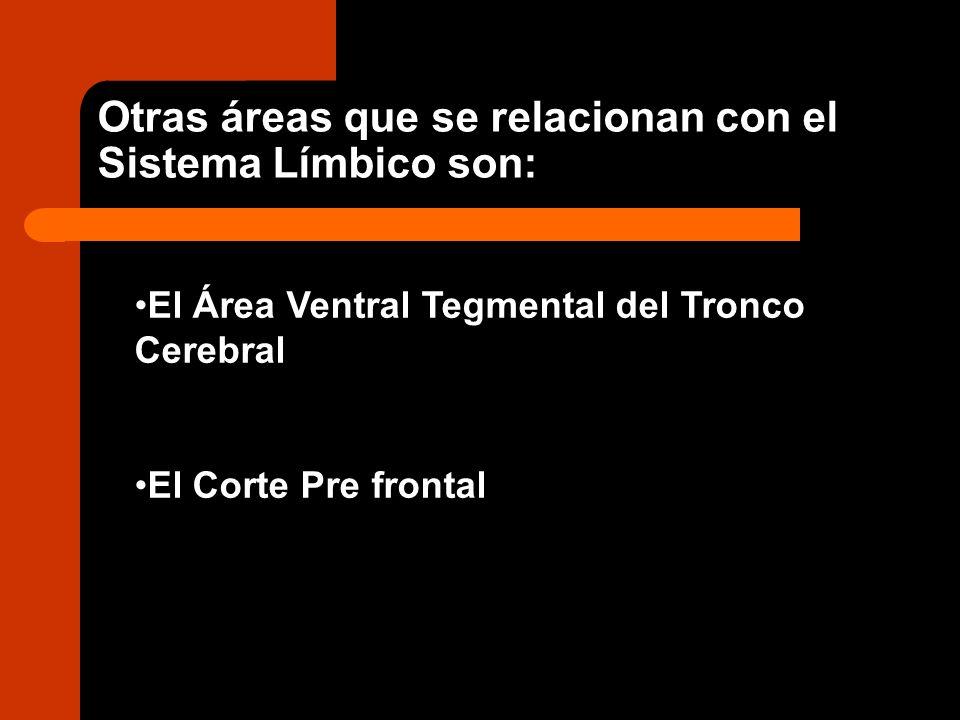 El Área Ventral Tegmental del Tronco Cerebral El Corte Pre frontal Otras áreas que se relacionan con el Sistema Límbico son: