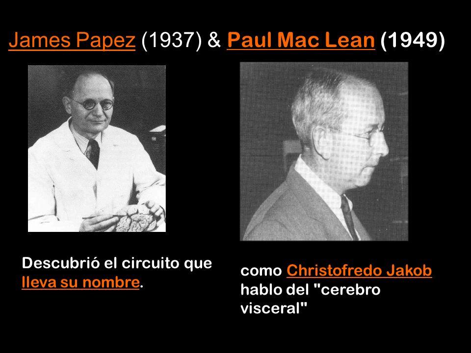 Descubrió el circuito que lleva su nombre. lleva su nombre James PapezJames Papez (1937) & Paul Mac Lean (1949) Paul Mac Lean como Christofredo Jakob
