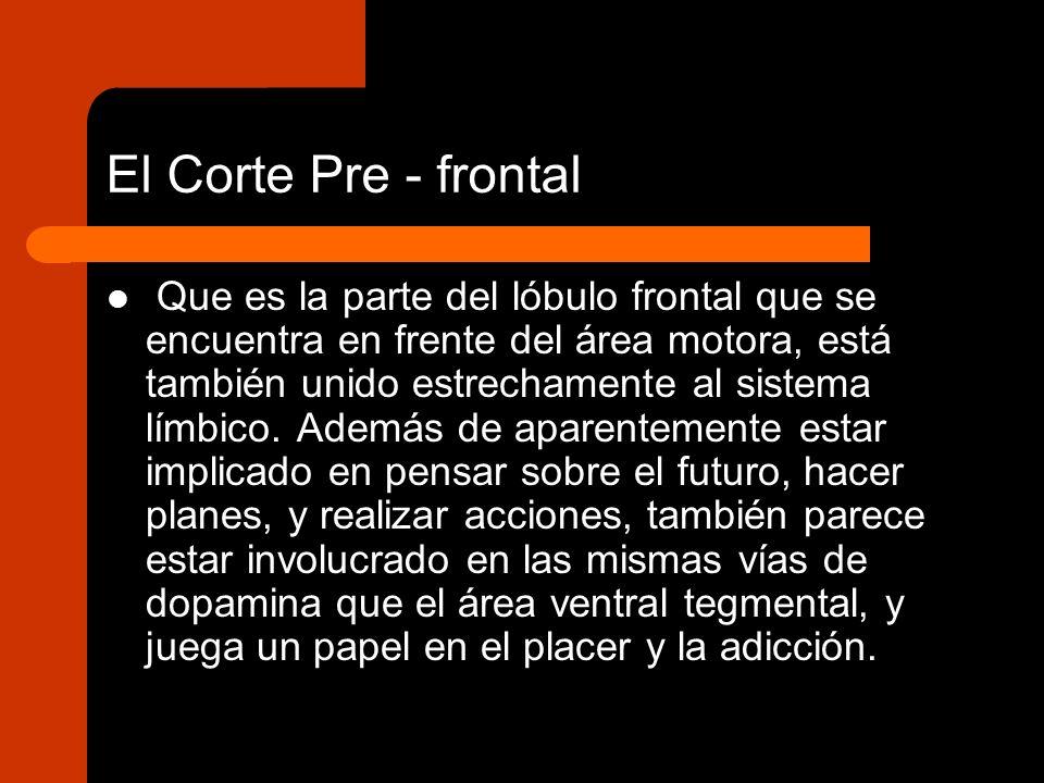 El Corte Pre - frontal Que es la parte del lóbulo frontal que se encuentra en frente del área motora, está también unido estrechamente al sistema límb