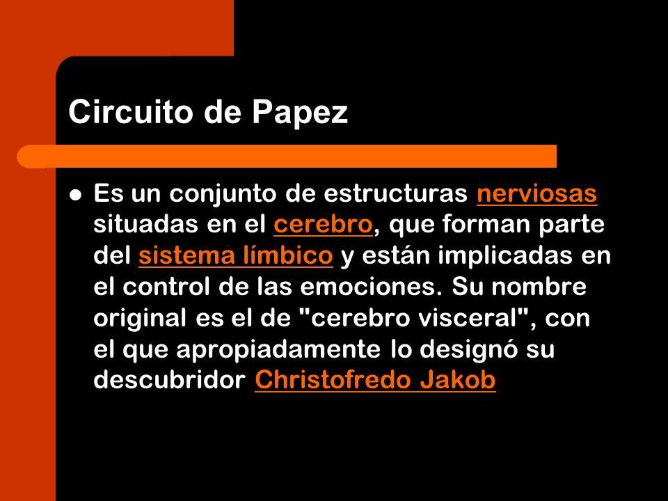 Circuito de Papez Es un conjunto de estructuras nerviosas situadas en el cerebro, que forman parte del sistema límbico y están implicadas en el contro