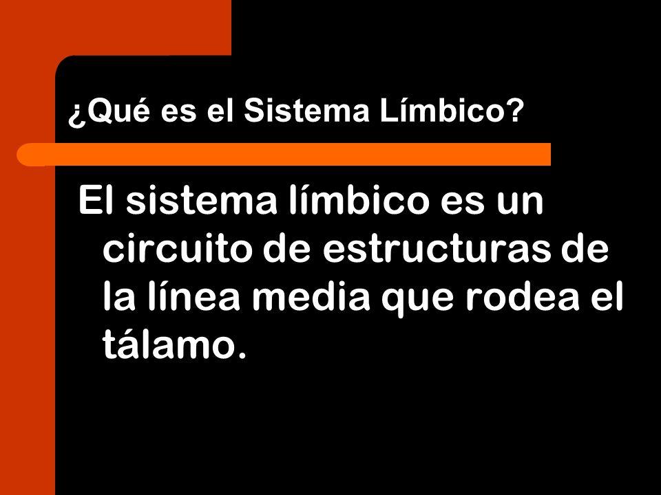 ¿Qué es el Sistema Límbico? El sistema límbico es un circuito de estructuras de la línea media que rodea el tálamo.