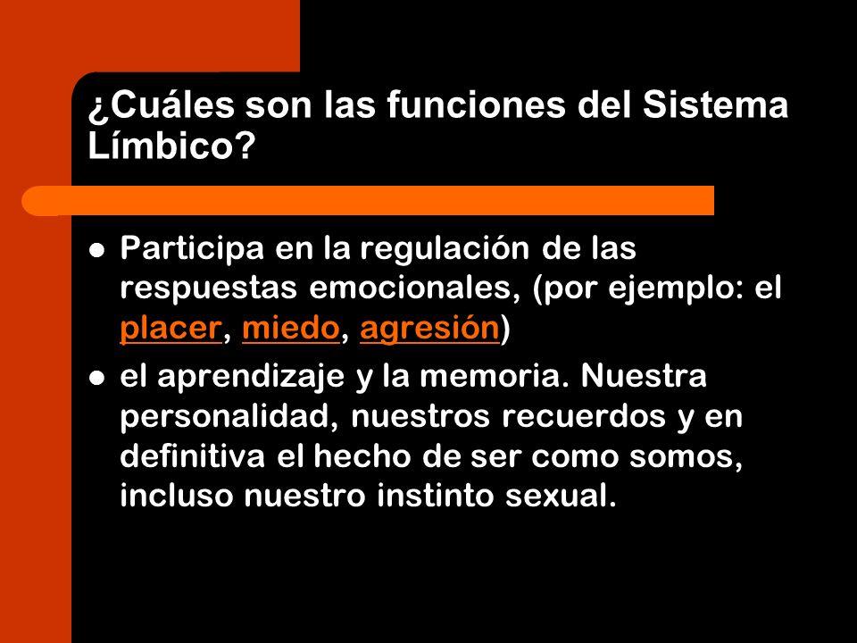 ¿Cuáles son las funciones del Sistema Límbico? Participa en la regulación de las respuestas emocionales, (por ejemplo: el placer, miedo, agresión) pla