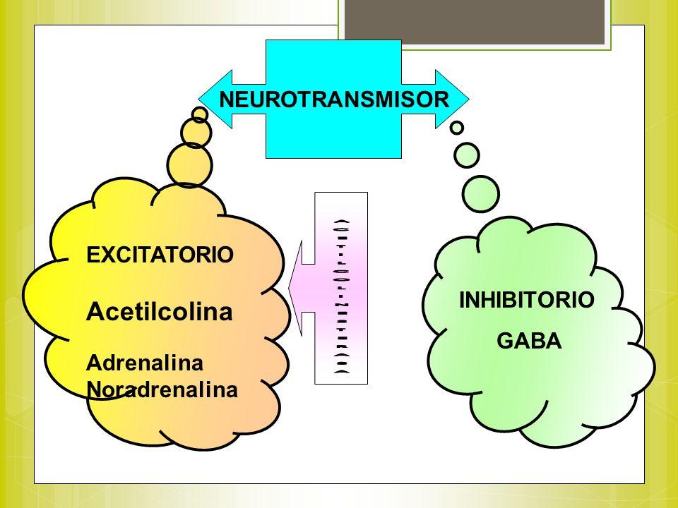 NEUROTRANSMISOR EXCITATORIO Acetilcolina Adrenalina Noradrenalina INHIBITORIO GABA